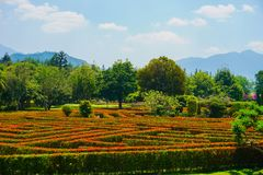 Maze park with red flower and green wall with big tree on the background - photo indonesia bogor stock photos
