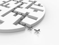 Maze puzzle-3d cartoon ants. 3d cartoon ants-leadership concept Royalty Free Stock Photo