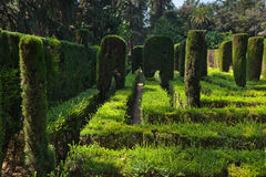 Maze at Real Alcazar Gardens in Seville Spain Royalty Free Stock Photos