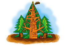 Pine tree maze Stock Images