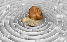 Maze to Snail Stock Photos