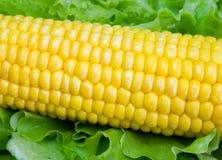 Mazorca de maíz Fotos de archivo libres de regalías