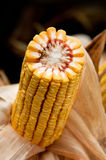 Mazorca de maíz Imagen de archivo libre de regalías