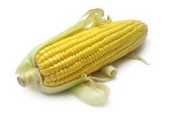 Mazorca de maíz Imágenes de archivo libres de regalías