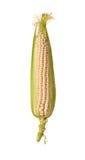 Mazorca de maíz Fotografía de archivo libre de regalías