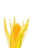 Mazorca de maíz aislada foto de archivo