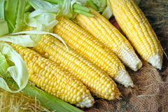 Mazorca de maíz con las hojas verdes Imagen de archivo
