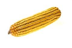 Mazorca de maíz del maíz Imágenes de archivo libres de regalías