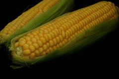 Mazorca de maíz en el fondo oscuro, cierre para arriba Foto de archivo