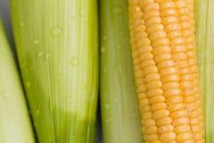Mazorca de maíz fresca Fotografía de archivo