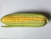 Mazorca de maíz fresco imágenes de archivo libres de regalías