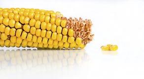 Mazorca y núcleos de maíz en blanco Fotos de archivo