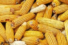 Mazorcas de maíz imagenes de archivo