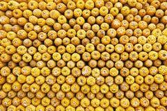 Mazorcas de maíz foto de archivo