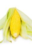 Mazorcas de maíz aisladas en el blanco Imagen de archivo libre de regalías