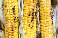 Mazorcas de maíz asadas a la parrilla en una placa blanca, visión superior foto de archivo