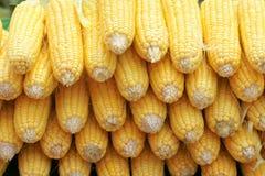 Mazorcas de maíz blandas fotos de archivo libres de regalías