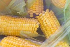 Mazorcas de maíz cocinadas en agua foto de archivo libre de regalías