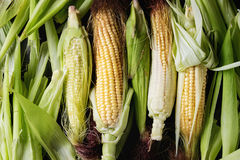 Mazorcas de maíz crudas jovenes imagen de archivo