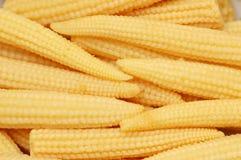 Mazorcas de maíz de bebé Imagen de archivo