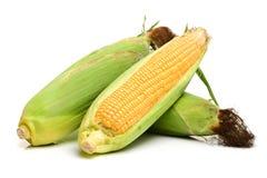 Mazorcas de maíz dulce fotografía de archivo