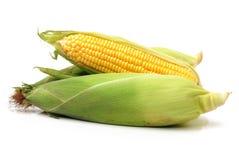 Mazorcas de maíz dulce fotos de archivo