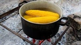 Mazorcas de maíz en agua hirvienda Ebullición en un pote en la participación imágenes de archivo libres de regalías