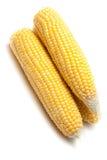 Mazorcas de maíz frescas Foto de archivo