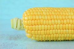 Mazorcas de maíz frescas Fotografía de archivo libre de regalías