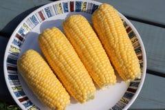 Mazorcas de maíz frescas listas para guisar. Imagen de archivo