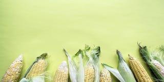 Mazorcas de maíz naturales maduras Consumición sana Productos respetuosos del medio ambiente Alimento biológico fotos de archivo libres de regalías