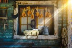 Mazorcas de maíz que cuelgan para secarse con el fondo de la ventana vieja Imagen de archivo