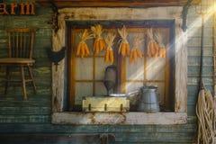 Mazorcas de maíz que cuelgan para secarse con el fondo de la ventana vieja Fotos de archivo libres de regalías
