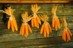 Mazorcas de maíz que cuelgan para secarse en una pared de la cabina Foto de archivo