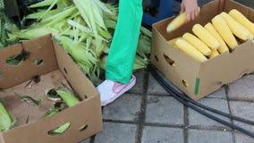 Mazorcas de maíz que descascaran manuales almacen de metraje de vídeo