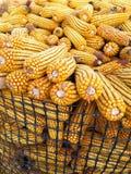 Mazorcas de maíz secadas fotos de archivo