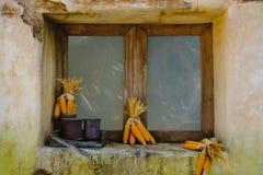Mazorcas de maíz a secarse con el fondo de la ventana vieja Estilo de la vendimia imagen de archivo