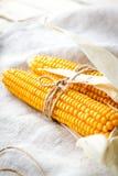 Mazorcas de maíz secas imagen de archivo libre de regalías