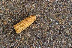 Mazorcas de maíz secas Imágenes de archivo libres de regalías