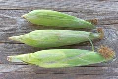 Mazorcas de maíz frescas Foto de archivo libre de regalías