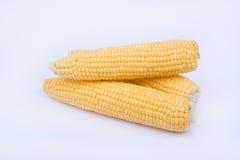 Mazorcas de maíz frescas en el fondo blanco Foto de archivo