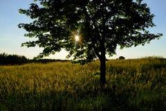 Mazurian łąka Obraz Royalty Free