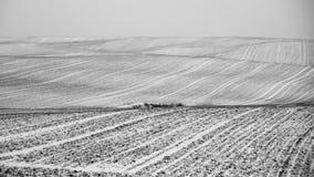 Mazury Ostroda pola zakrywający w śniegu w Polska Zdjęcia Stock