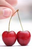 mazzard вишни Стоковые Фотографии RF