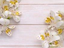 Mazzi dei fiori teneri di alstroemeria Immagine Stock