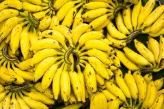 Mazzi della banana Immagini Stock Libere da Diritti