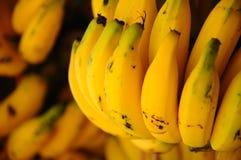 Mazzi di banane gialle Fotografie Stock