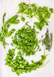 Mazzi di erbe verdi per insalata: Sedano di montagna, gronda della borragine, crescione di giardino, la lattuga del minatore Immagini Stock Libere da Diritti