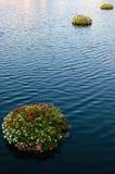 Mazzi di galleggiamento Fotografie Stock