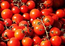 Mazzi di pomodori ciliegia freschi Fotografie Stock Libere da Diritti